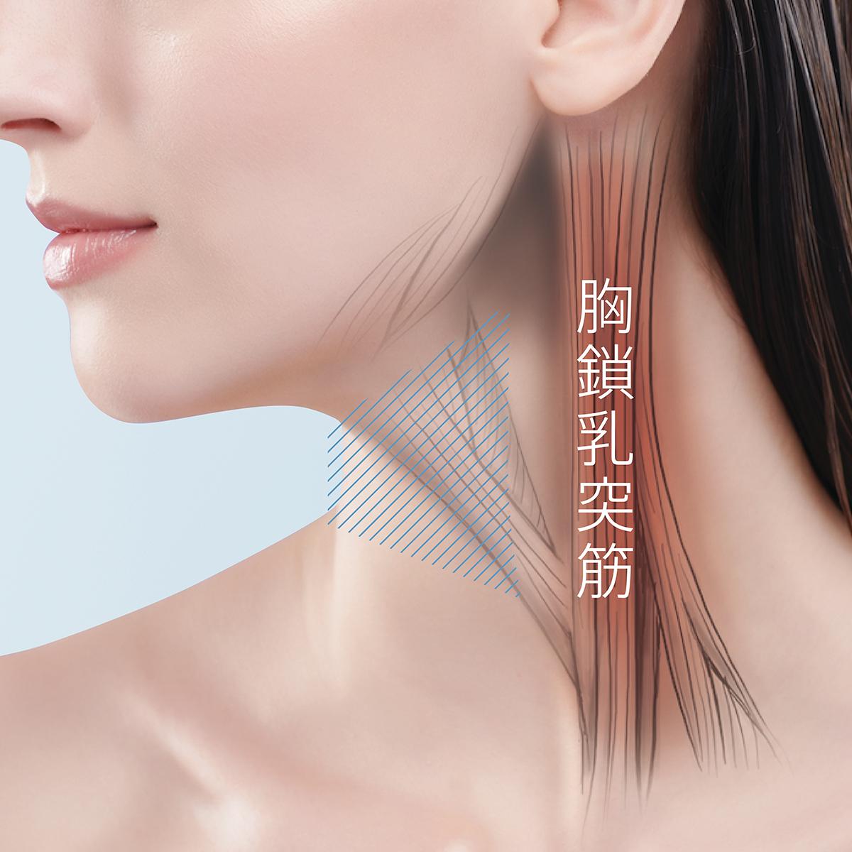 突筋 乳 胸 鎖